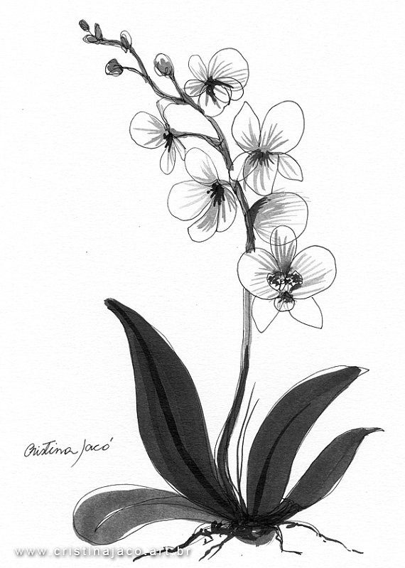 Orchid Black And White Original Art Minimalist By Cristinajaco 25 00 Orchid Drawing Flower Drawing Flower Sketches