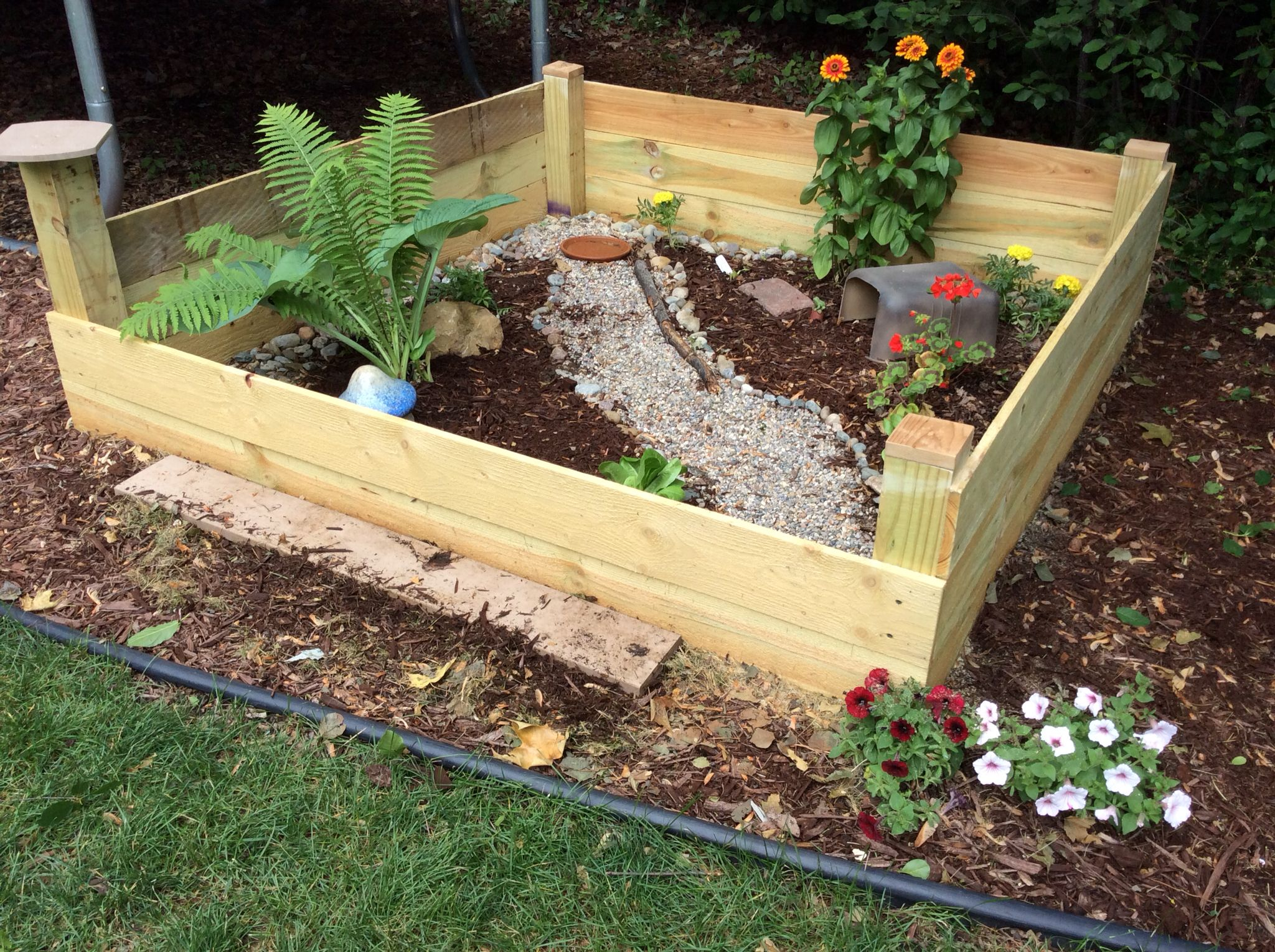 outdoor tortoise enclosure has edible romaine plants gasta