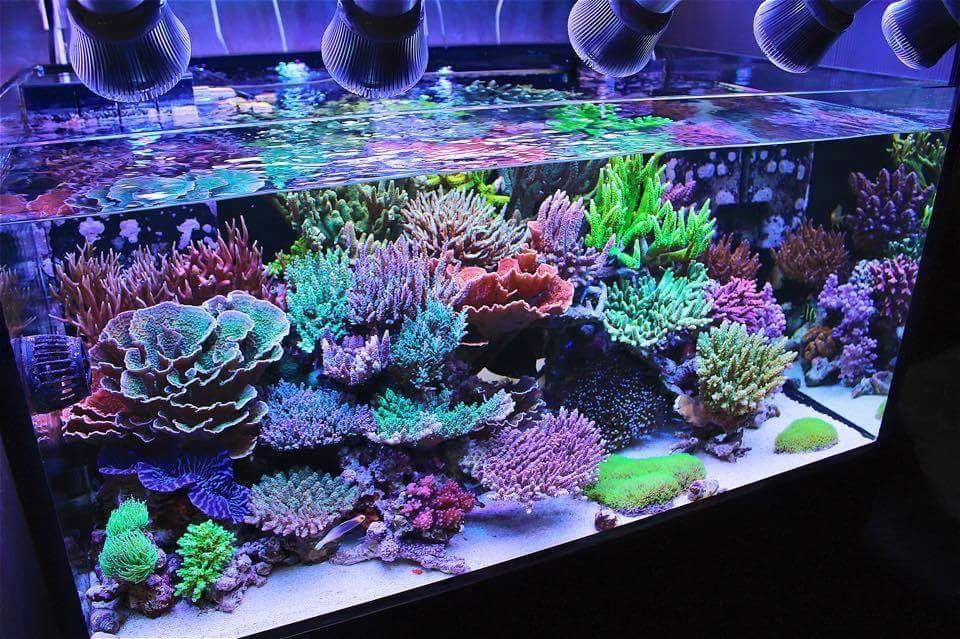 Aquascaping Show Your Skills Page 31 Marine Fish Tanks Saltwater Aquarium Beginner Aquarium Fish Tank
