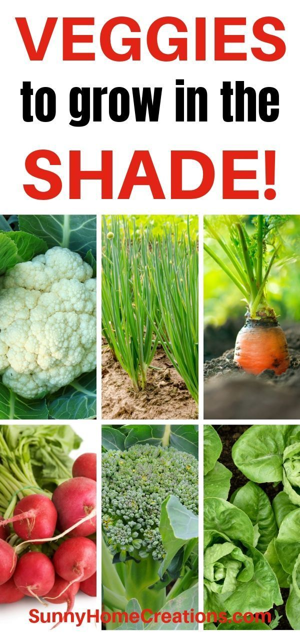Vegetables that Grow in Shade #veggiegardens