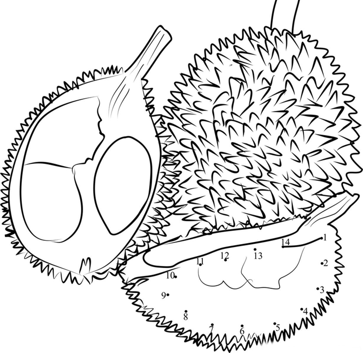 gambar buah durian untuk diwarnai Durian, Symbols, Dots