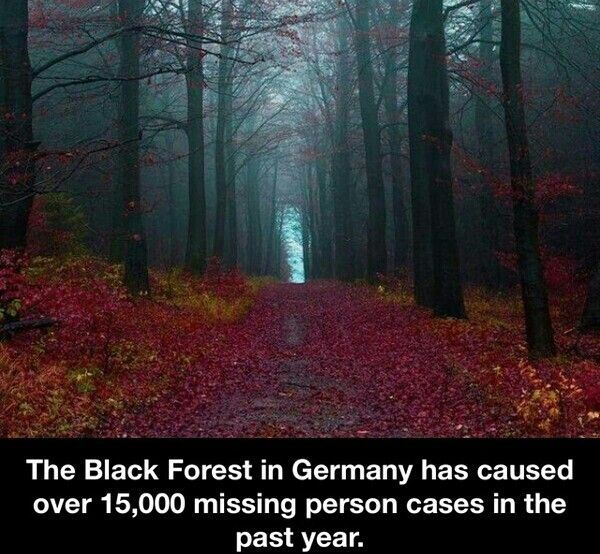 Story idea  The Black Forest in Germany has