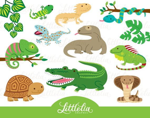 Reptile Clipart Reptile Cute 16019 Clip Art Reptiles Baby