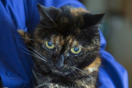 A 26-year-old tortoiseshell cat named Tiffany, who lives in San Diego, CA with her human, Sharron Voorhees, 73, a retired lawyer and lifelong animal lover, holds the Guinness World Record for being the world's oldest living cat. Voorhees brought Tiffany home when she was seven weeks old. Tiffany will turn 27 in March. When asked …