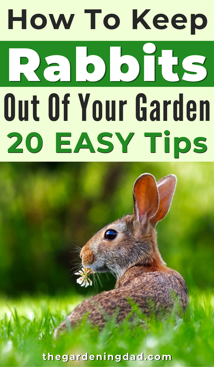 How to Keep Rabbits Out of Garden (20 EASY Tips) | Garden ...