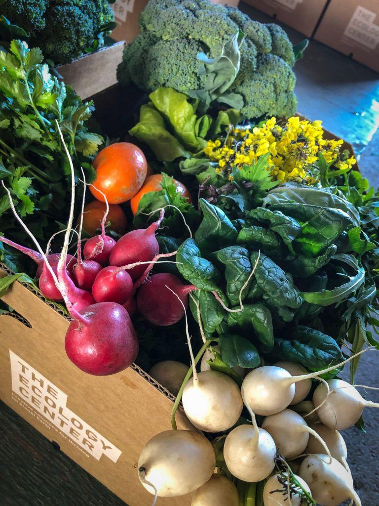 Farm Share Program Edible garden, Rogers gardens, What