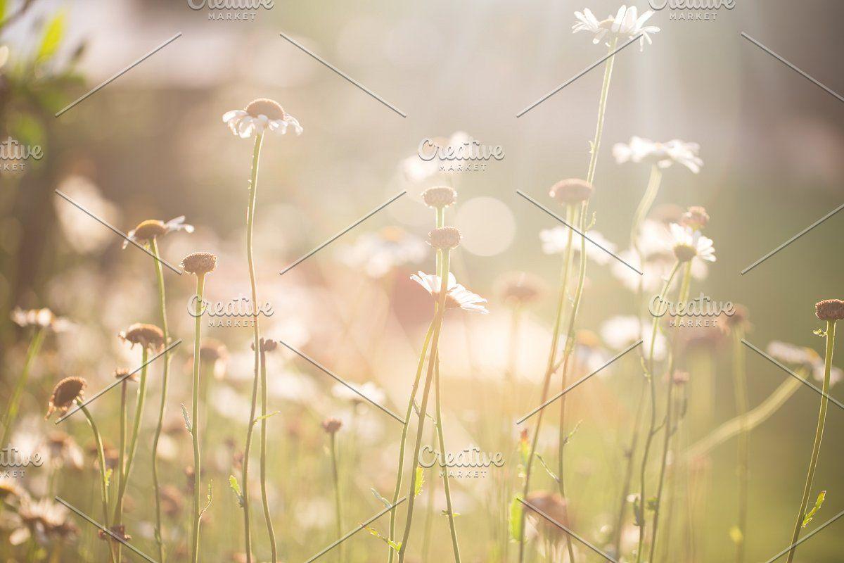 Flora Backgrounds Bundle in 2020 Flora background