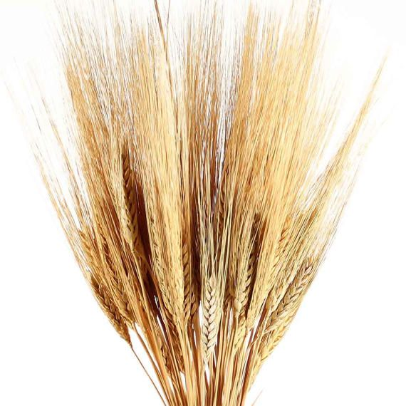 Dried Wheat Bunch 1 For Floral And Event Decorating Wheat Bundle Dried Wheat Golden Wheat
