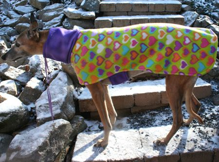 Famous Greyhound Coat Sewing Pattern Pictures - Easy Scarf Knitting ...