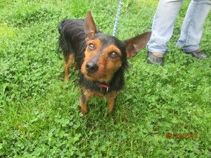 Mickey T is an adoptable Terrier Dog in Norwalk, CT. � PLEASE COME AND MEET ME! SATURDAYS & SUNDAYS SPCA OF CONNECTICUT & ANIMAL ADOPTION NETWORK 359 SPRING HILL ROAD MONROE, CT 06468 NOON - 3 PM (203...