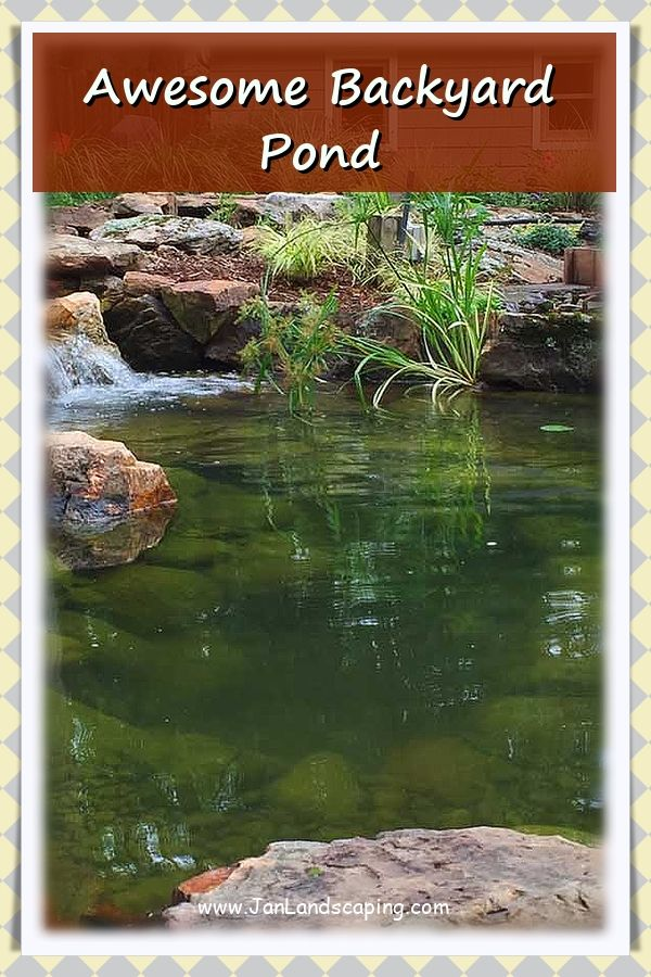 How To Build A Small Pond in 2020 | Pond plants, Pond ...