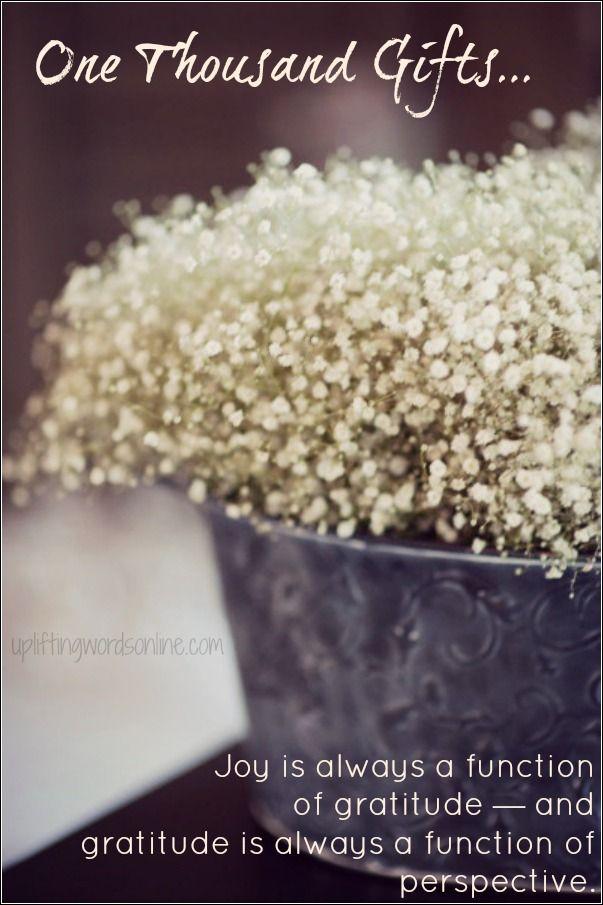 One Thousand Gifts Babys Breath Flowers Beautiful Flowers