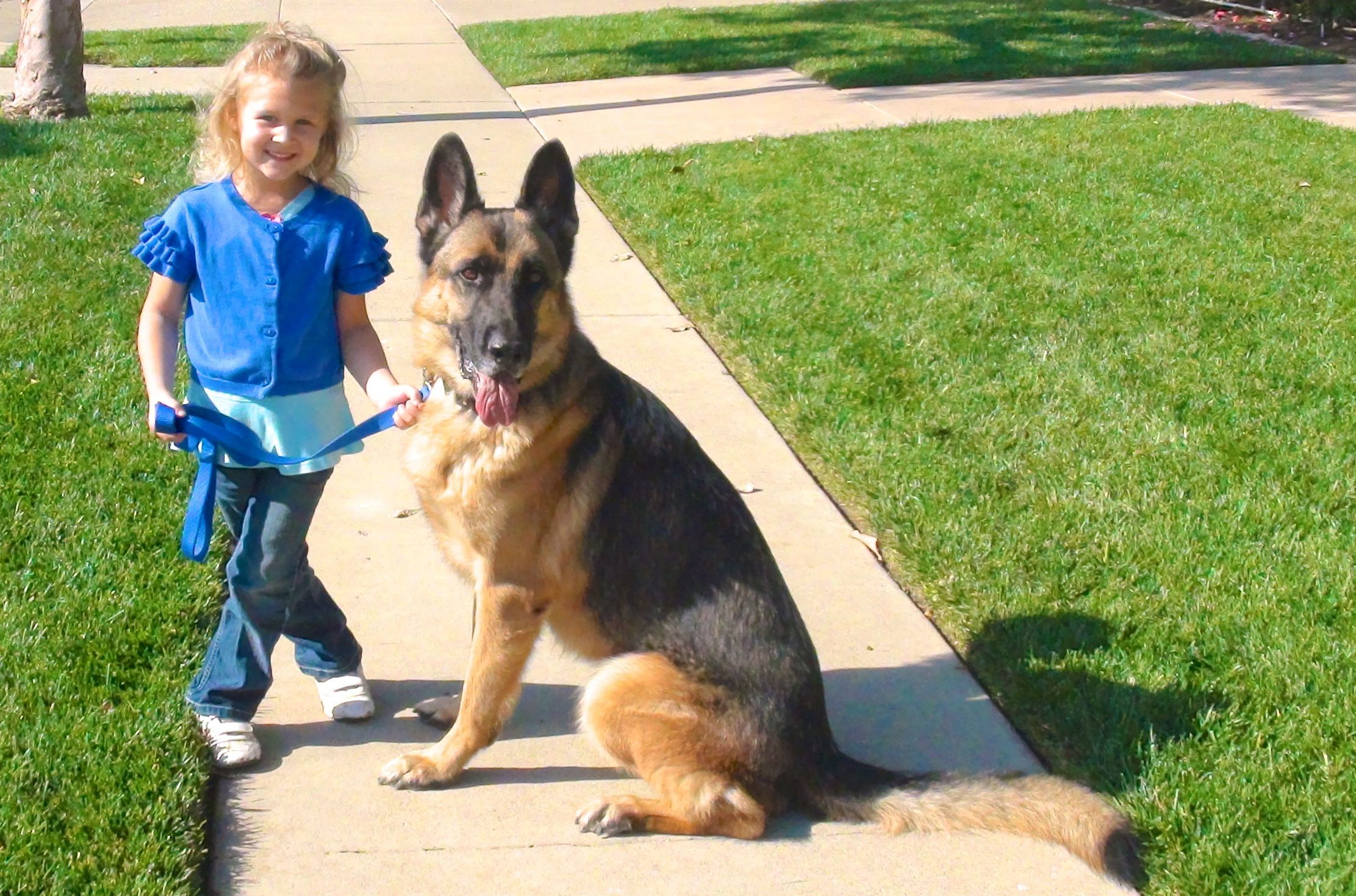 4 Year Old Dog Trainer With A Matching Leash Dogs Old Dogs