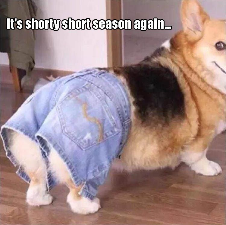 Funny Pictures Of The Day - 33 Pics | Funny Animals ...