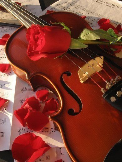 Beautiful violin photography