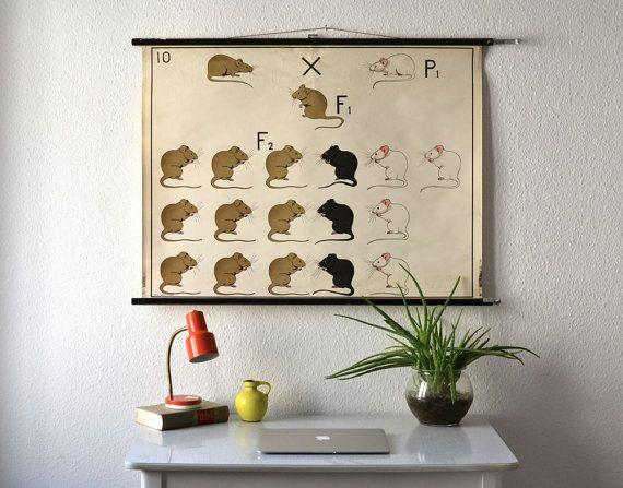 Vintage school pull down chart map genetics rats biology biological East German print 50s 60s on Etsy, $253.06