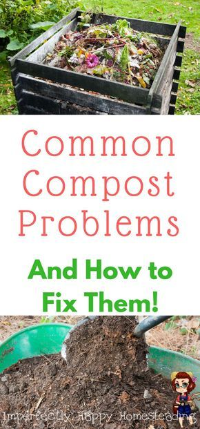 Troubleshooting Your Compost Composting Garden