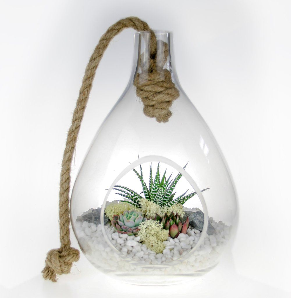 Curvy Teardrop Glass And Rope Terrarium Kit Hanging Planters And