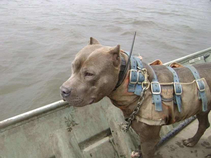 Protection Training For Dogs In Louisiana