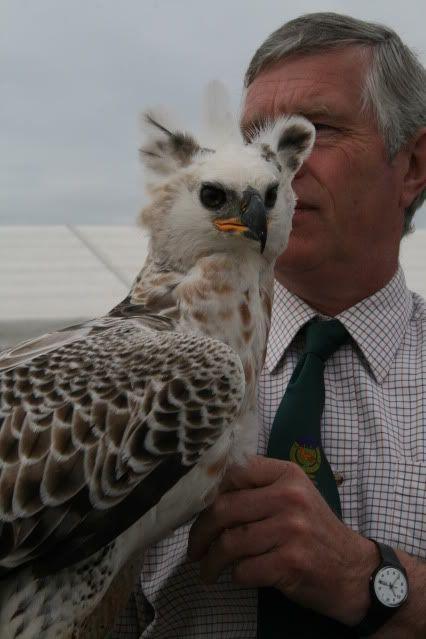 Falconry UK Thirsk 15/02/14 | Канюк, Красивые птицы и Птицы  |African Crowned Eagle Falconry