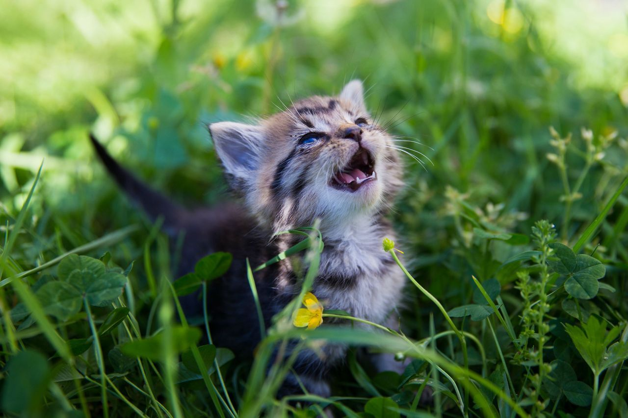 Tiny Place Happy But Hkirkh Kitten Meeting The Sun For The First Cats Kittens Cutest Kitten