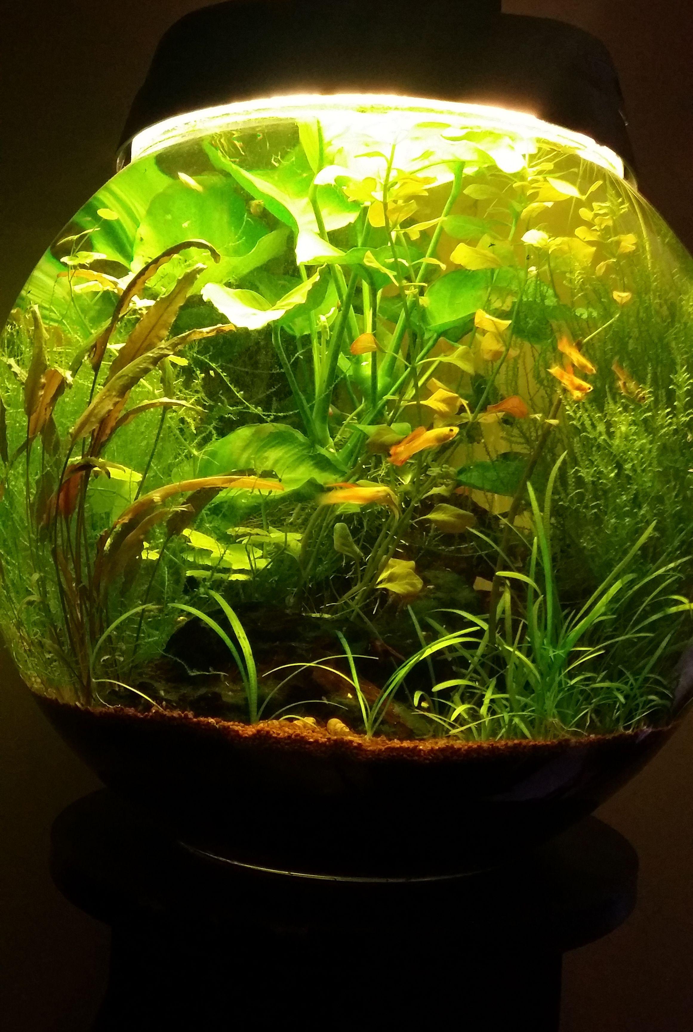 Elegant aquarium petit id es de conception de table basse for Mini aquarium boule