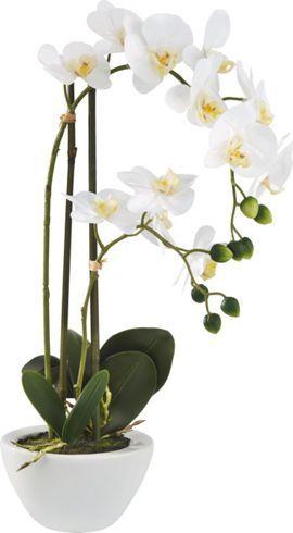 Dekorative Phalänopsis in Weiß - eine pflegeleichte Kunstpflanze für Ihr Heim