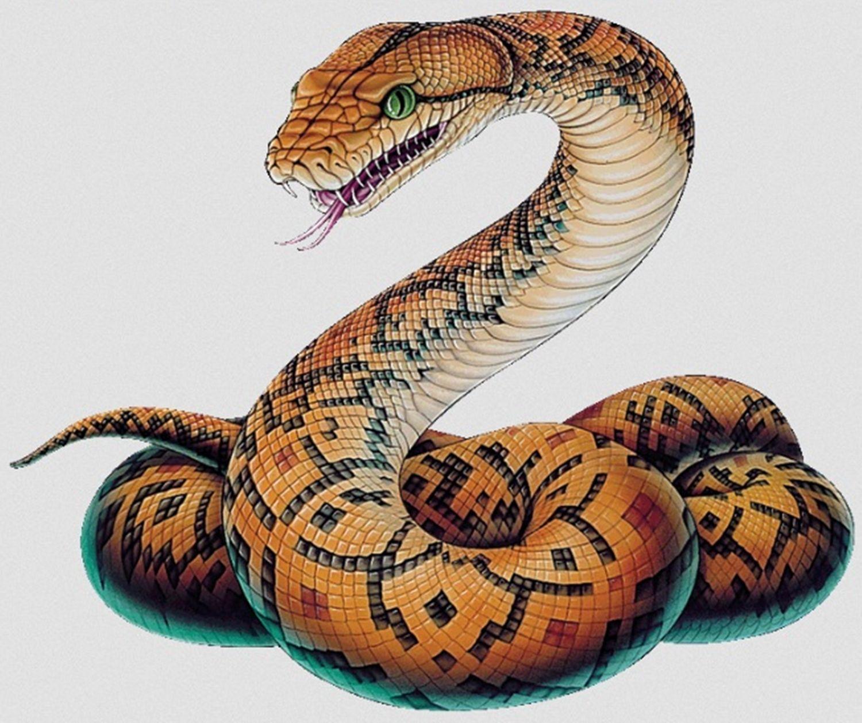Утро солнышко, змеи картинки красивые нарисованные