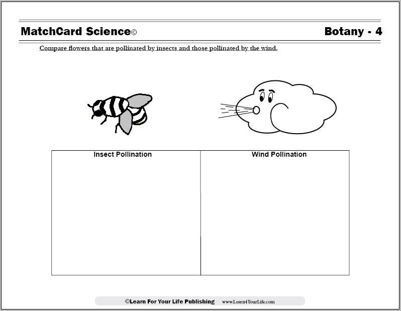 Pollination Of Flowers Pollinating Flowers Science For Kids Pollination Wind worksheets for kindergarten