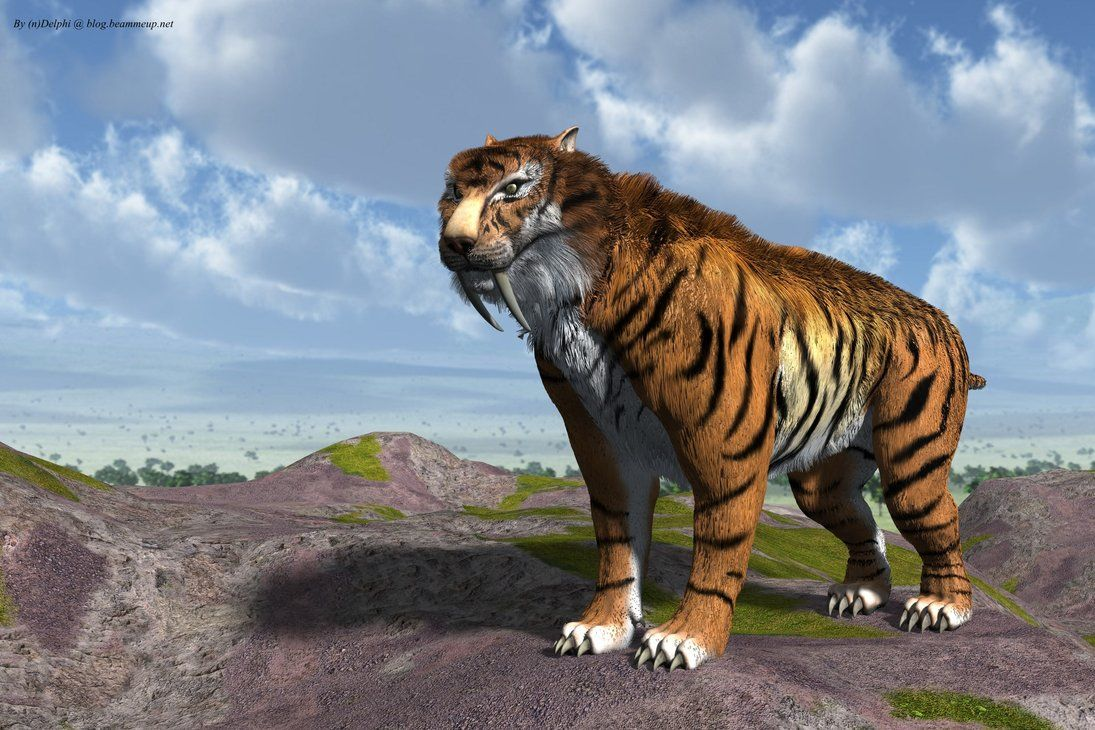 saber tooth tiger wallpapers | wallpapers | pinterest