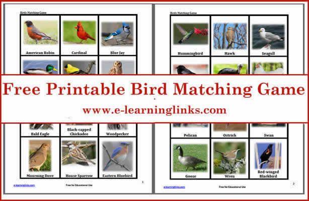 Free Printable Bird Matching Game | Birds, Preschool games