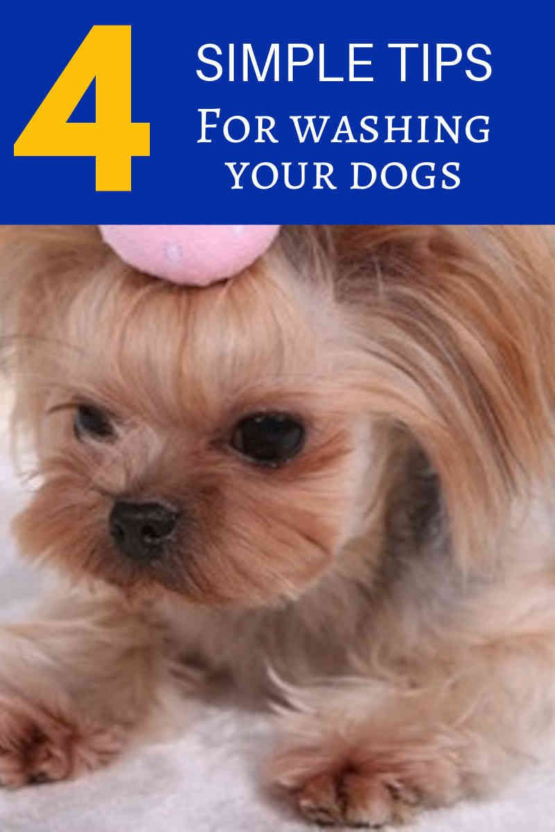 While Attempting Pet Grooming At Home You Should Be Mindful A