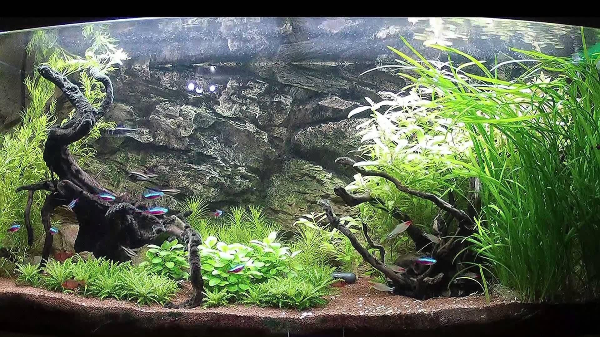 6edc732a7559ea8655f5a37da03ea0f6 Frais De Aquarium Amazonien Concept