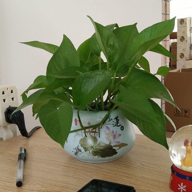 Click to Buy \u003c\u003c Eileen said ceramic vase flowerpot small fresh