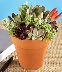 Succulent Garden....love this!!!
