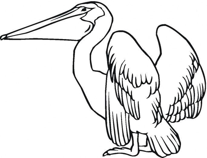 Delightful Pelican Coloring Page