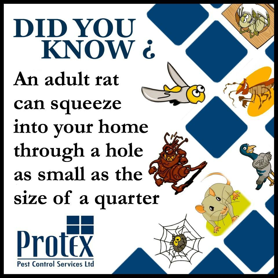 Protex Pest Control Did You Know ? Ants Bees Bugs