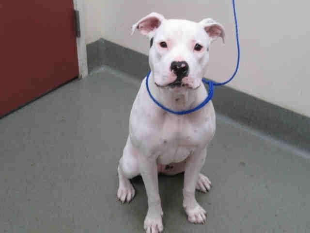 About Ellie My name is ELLIE. I'm a female WHITE/BLACK