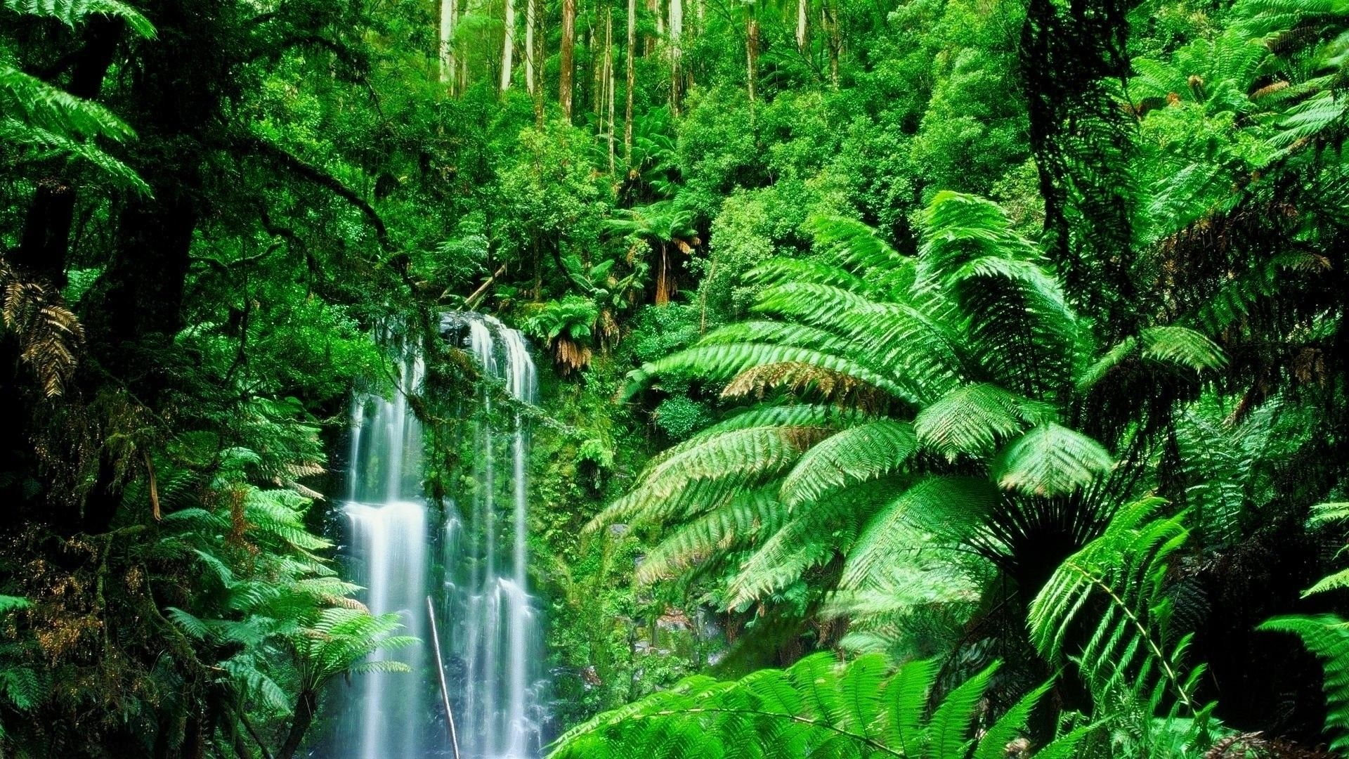 Amazon Rainforest Feel The Rainfall Of Leaves Rainforest Pictures Jungle Images Green Landscape