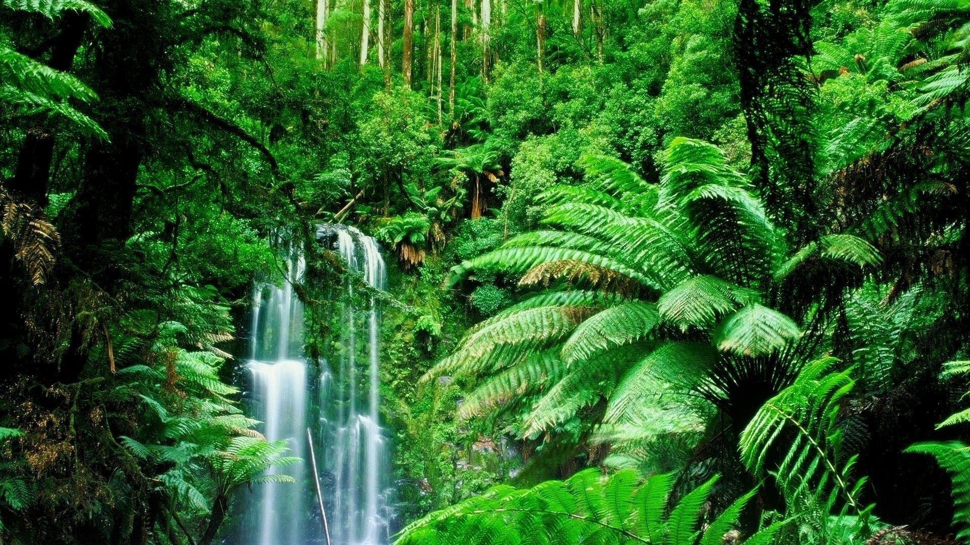 Amazon Rainforest Feel The Rainfall Of Leaves