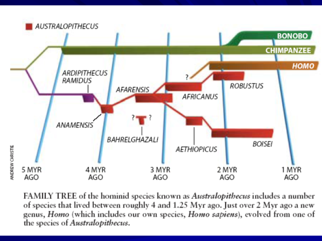 the evolution of humans The evolution from our closest non-human ancestor to present day humans is one with many transitions some of these transitions are widely agreed upon by t.