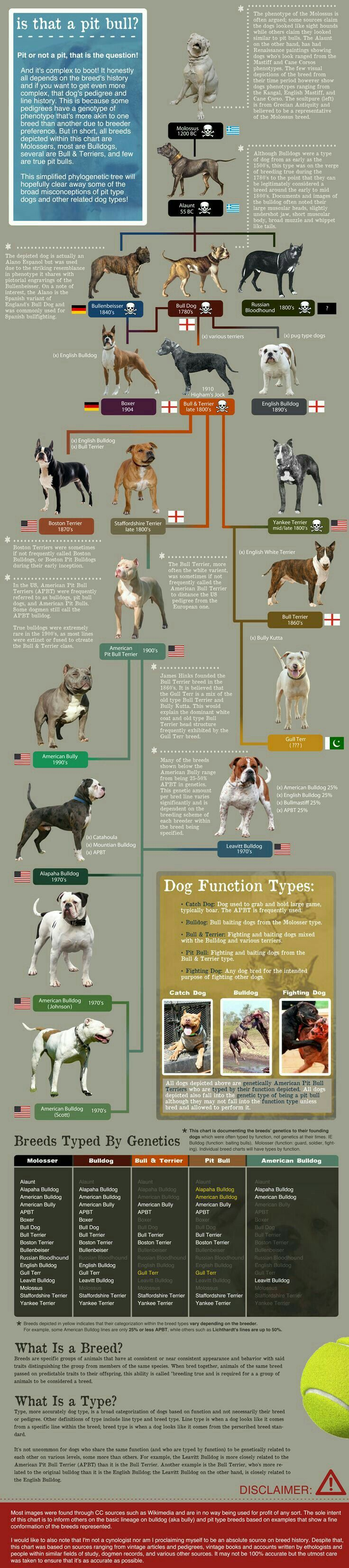 Dog Chart Bully Dog Pitbull Terrier Dog Breeds