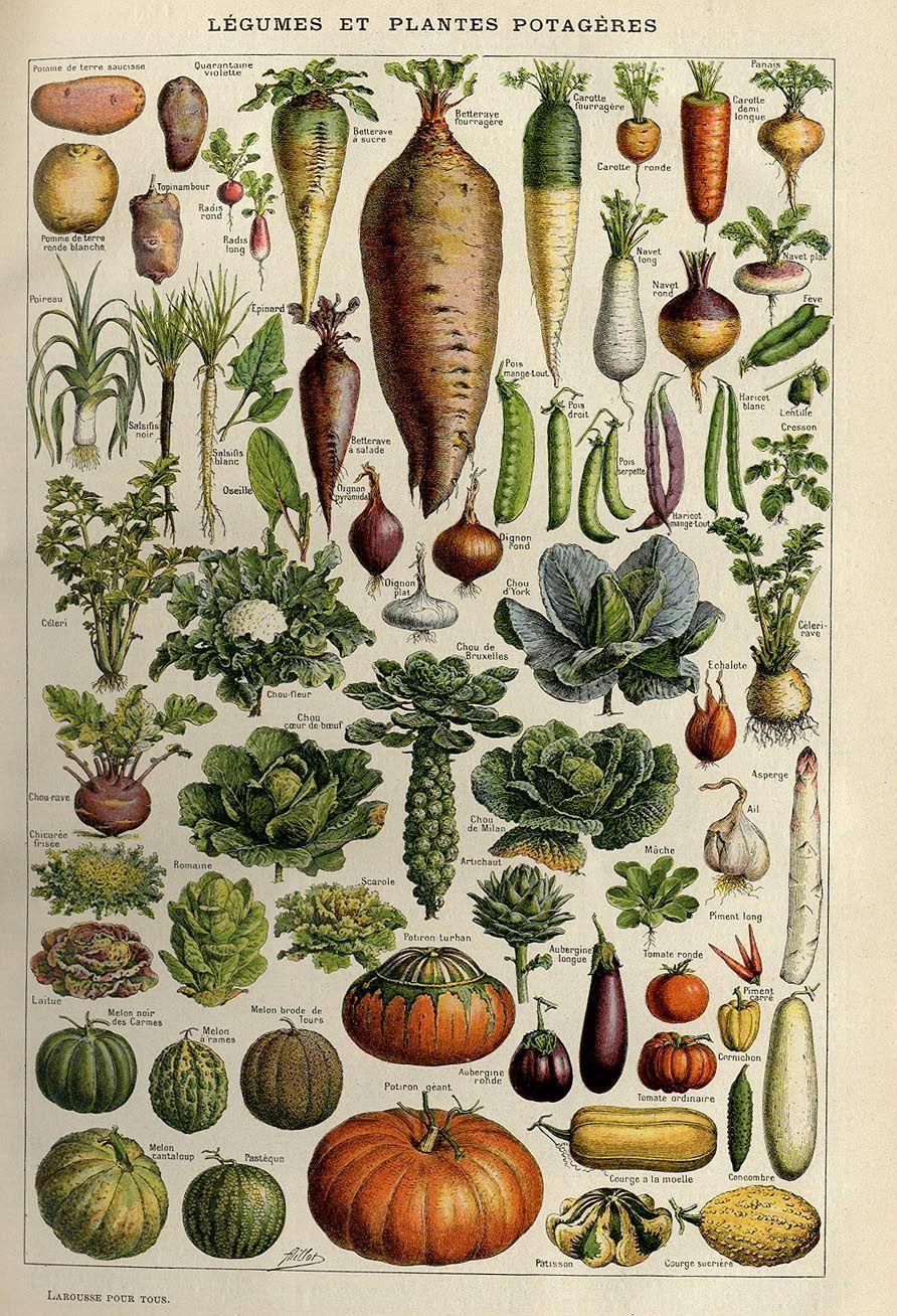 Vegetables, Larousse pour tous, c. 1910 in 2020 ...