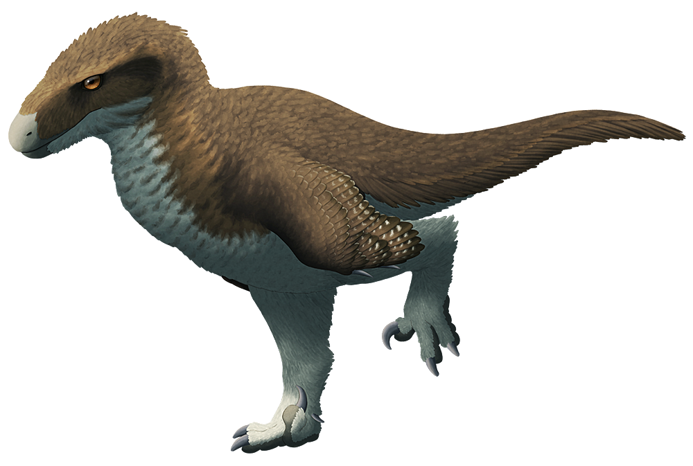 art #utahusa Utahraptor ostrommaysorum lived during the Early Cretaceous (~130-124 mya) in Utah, USA, and was the largest known dromaeosaurid. Reaching lengths of around 6m long (20′), it's often compared in size to the fictional raptors of Jurassic Park. Recent... #utahusa