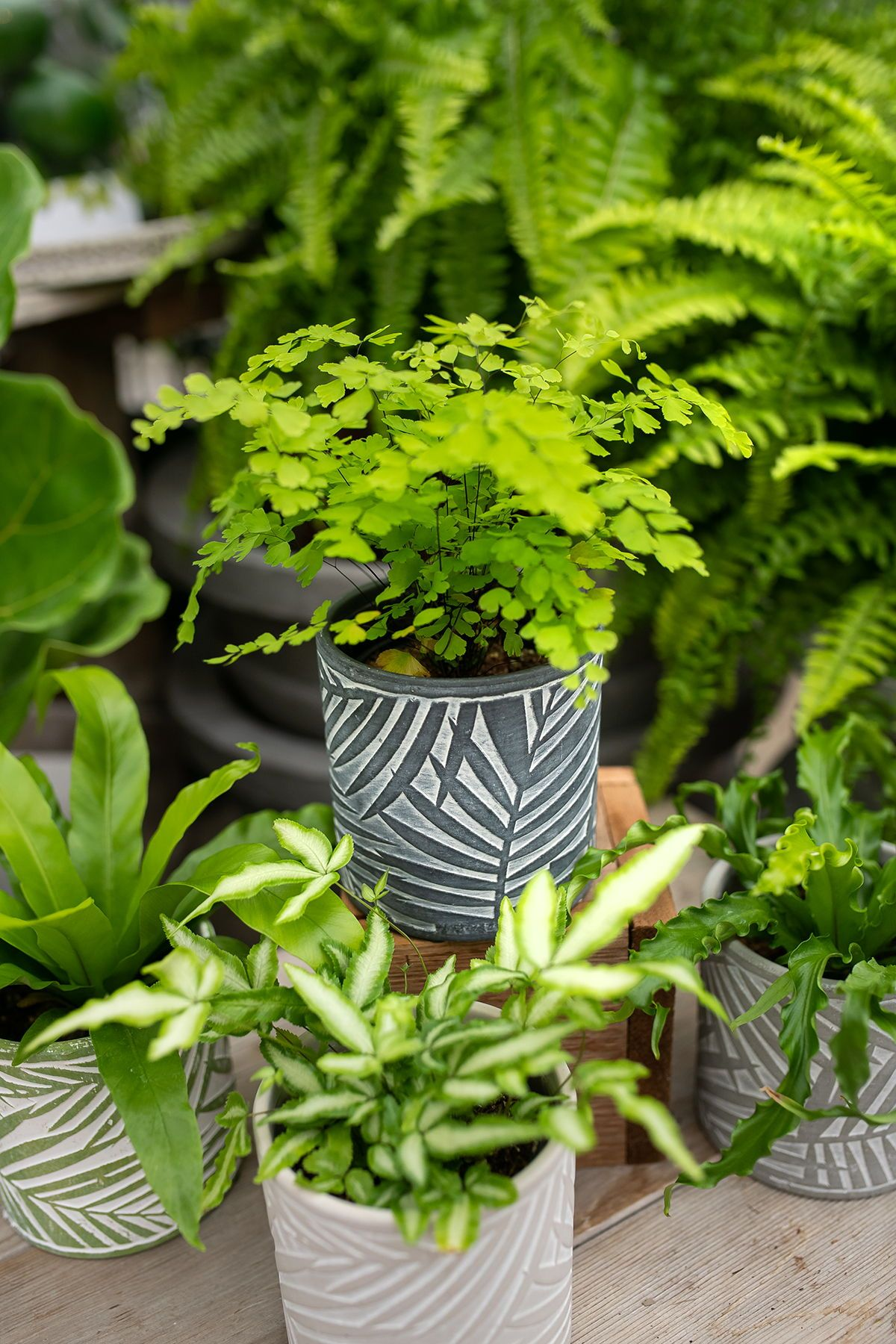 Gorgeous ferns in palm patterned pots! www ...