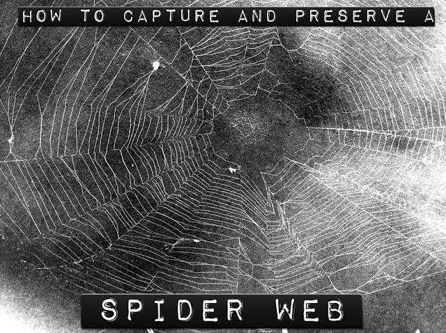 Play Create Explore: How to Capture and Preserve a Spider Web