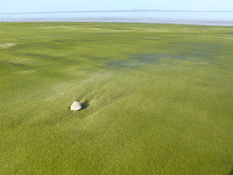La-playa-de-arena-verde-en-Kourou-Guayana-Francesa-Hawaii