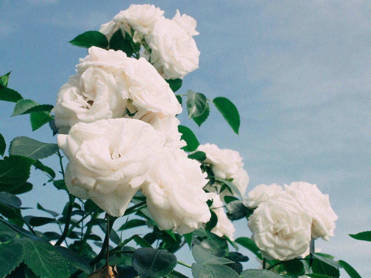 Gabriellem162 Aes Flower Power Pinterest