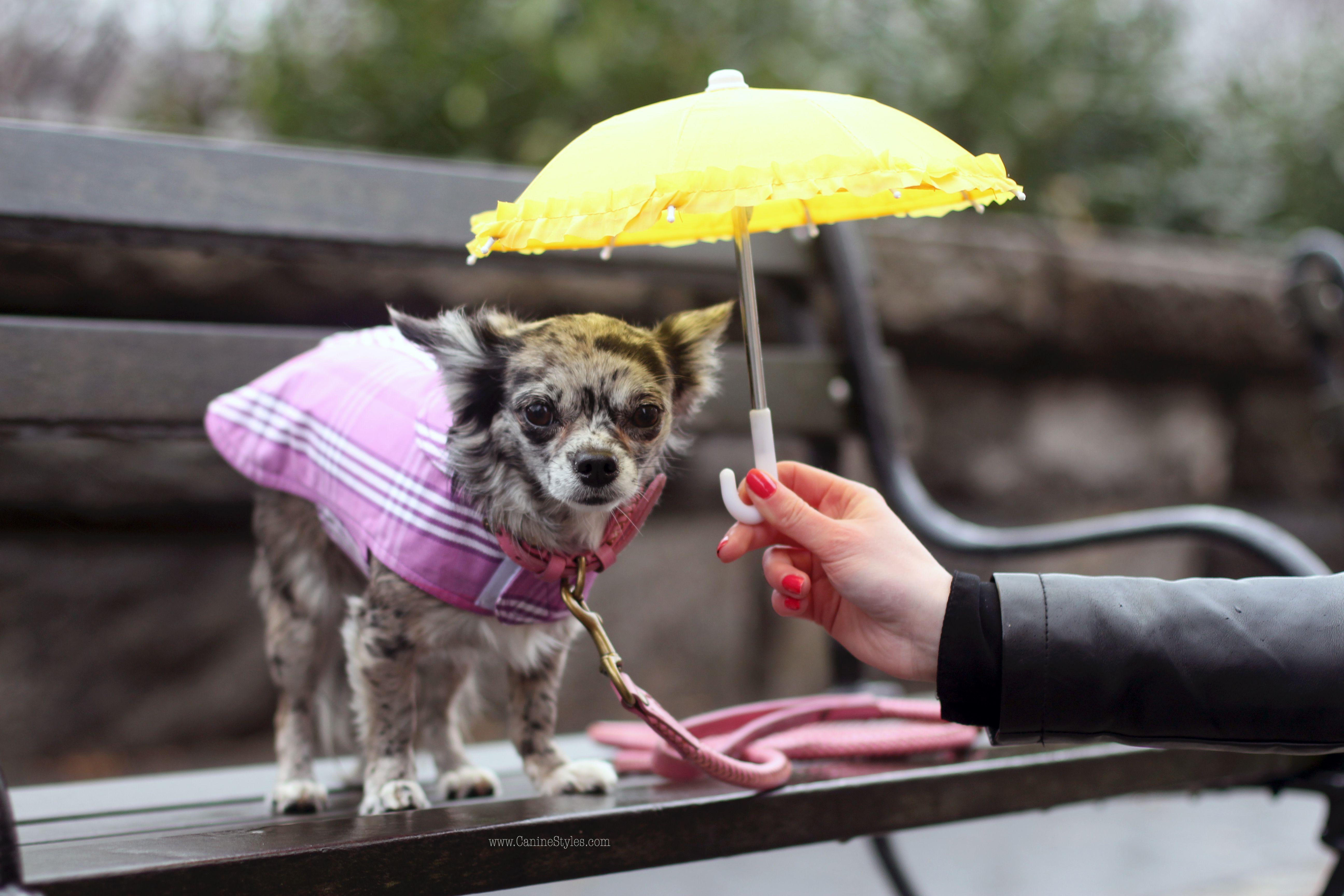 Pebbles Known On Instagram As Flintstonepups Picks Out Her Favorite Rainy Day Dog Gear Purple Plaid Rain Coat Braid Le Canine Dog Gear Funny Dog Photos