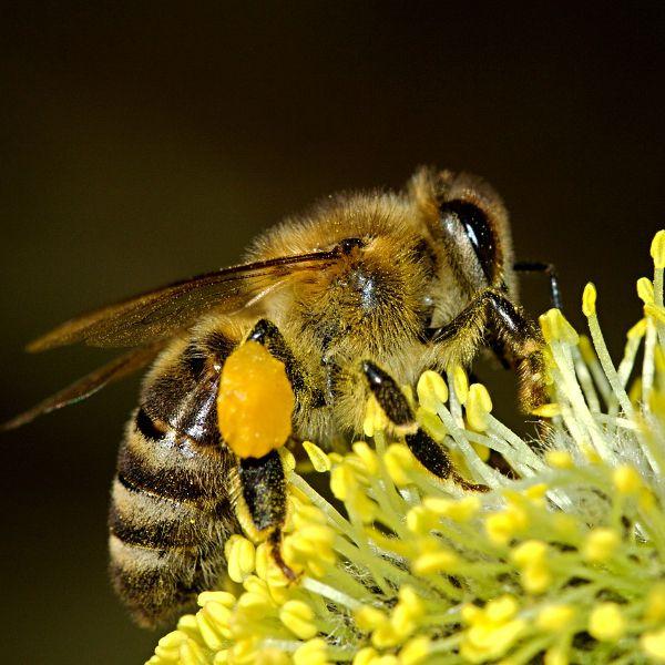 Lovely Bienen im eigenen Garten oder in der Stadt zu halten ist der Traum vieler Hobbyimker